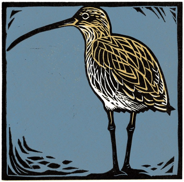Curlew on Shore